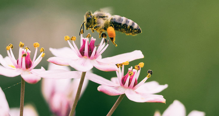 Honey Plants and Flowers that Attract Honey Bees