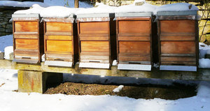 What Happens to Honey Bees in the Winter