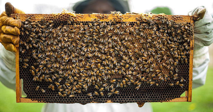 Why beekeeping is important