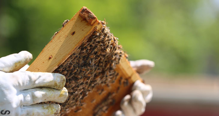 beekeeping safety tips