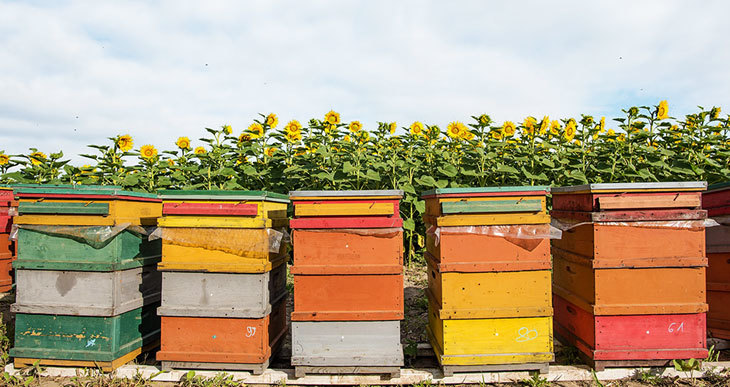 How to Paint Beehives