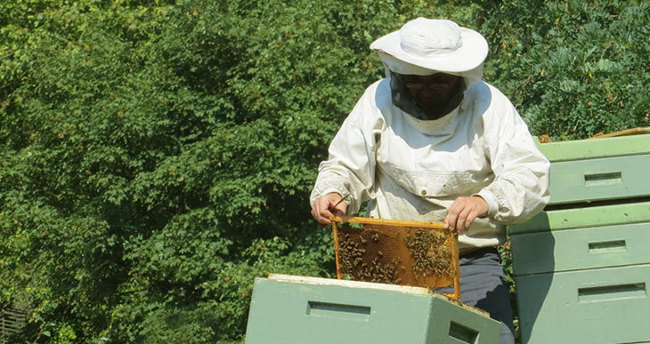 Is Beekeeping Hard