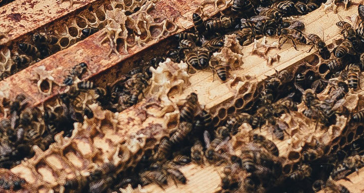 What is Burr Comb and How to Control it?