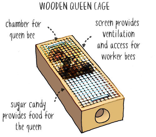 wooden type queen cage