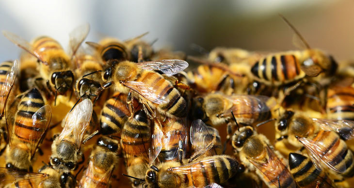 types of honey bees in a hive